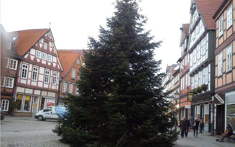 Der Baum steht – der Weihnachtsmarkt kann kommen