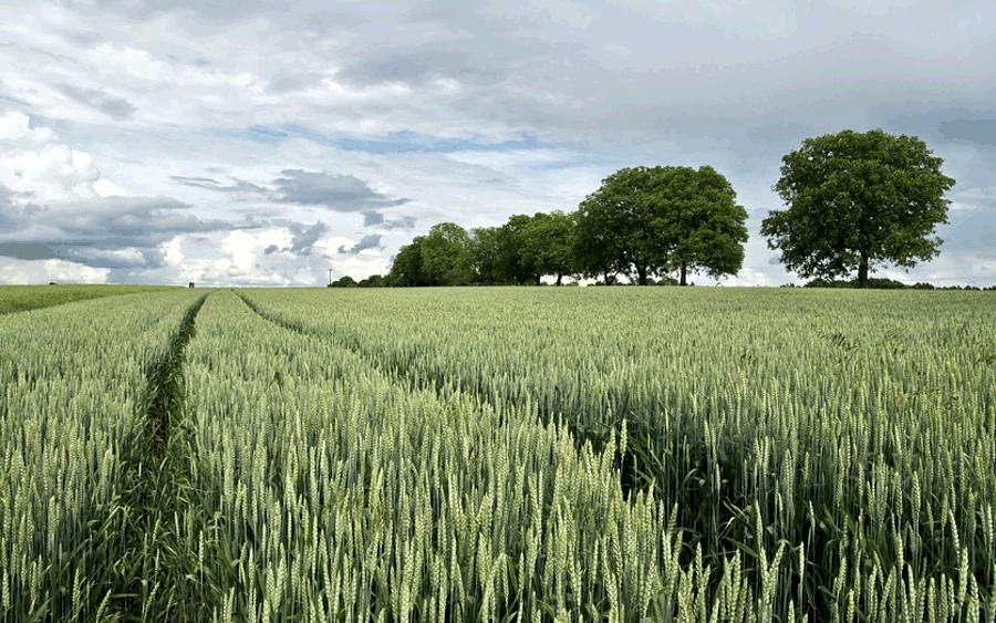 Verpachtung landwirtschaftlicher Flächen – Angebote ab sofort auf www.celle.de