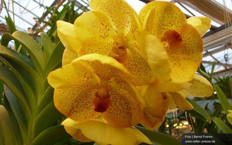 Tage der offenen Tür im Orchideen Zentrum Celle