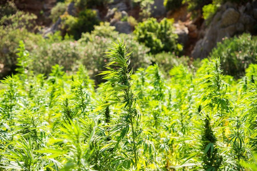 Polizei beschlagnahmt Cannabis