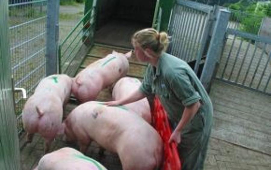 Neues Konzept: Beruf Landwirt ist attraktiv!