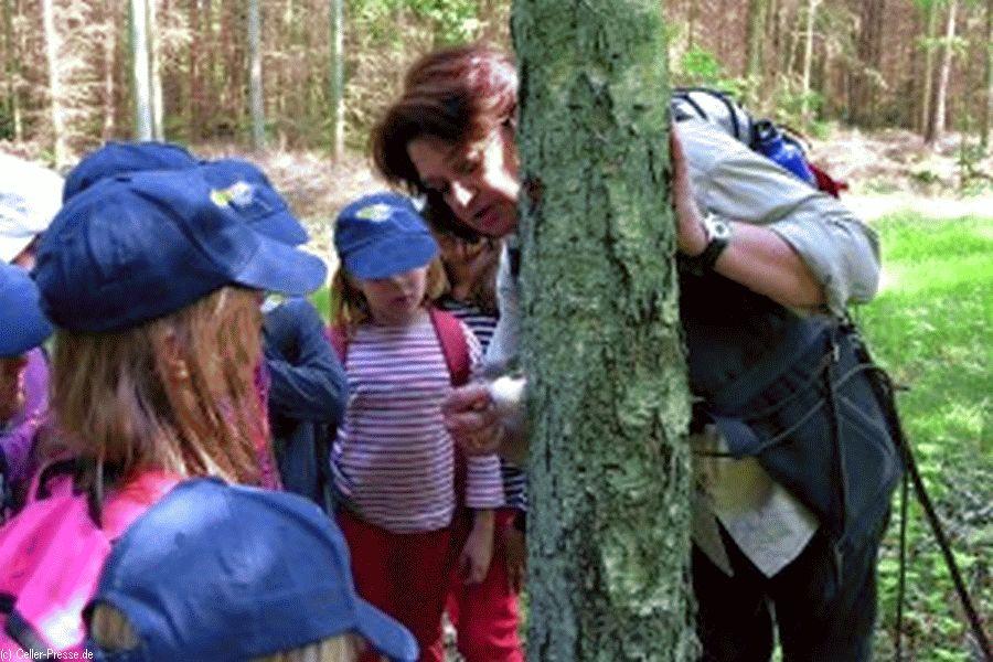 Waldführerschein für Kinder in Breitenhees – Waldpädagogikzentrum Ostheide bietet eine dreitägige Ferienaktion an