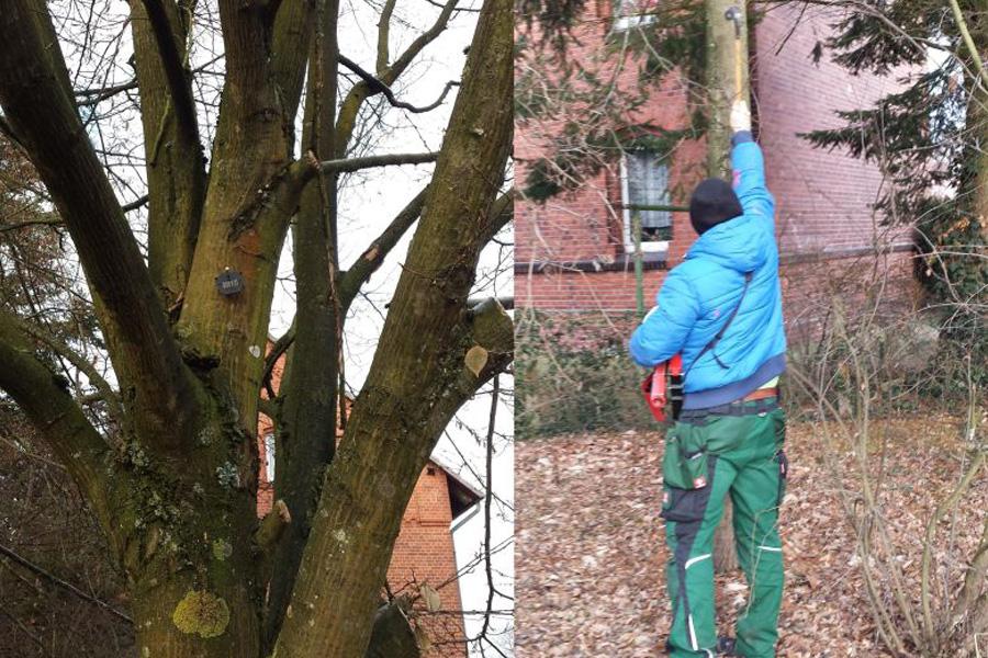 Einzelne Bäume müssen auf dem Prüfstand