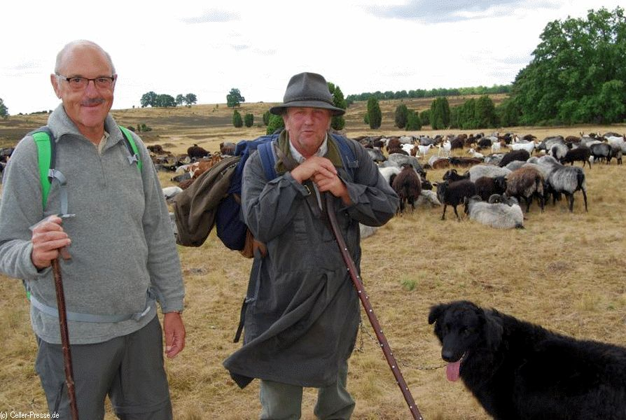 Mit ruhiger Hand die Herde hüten