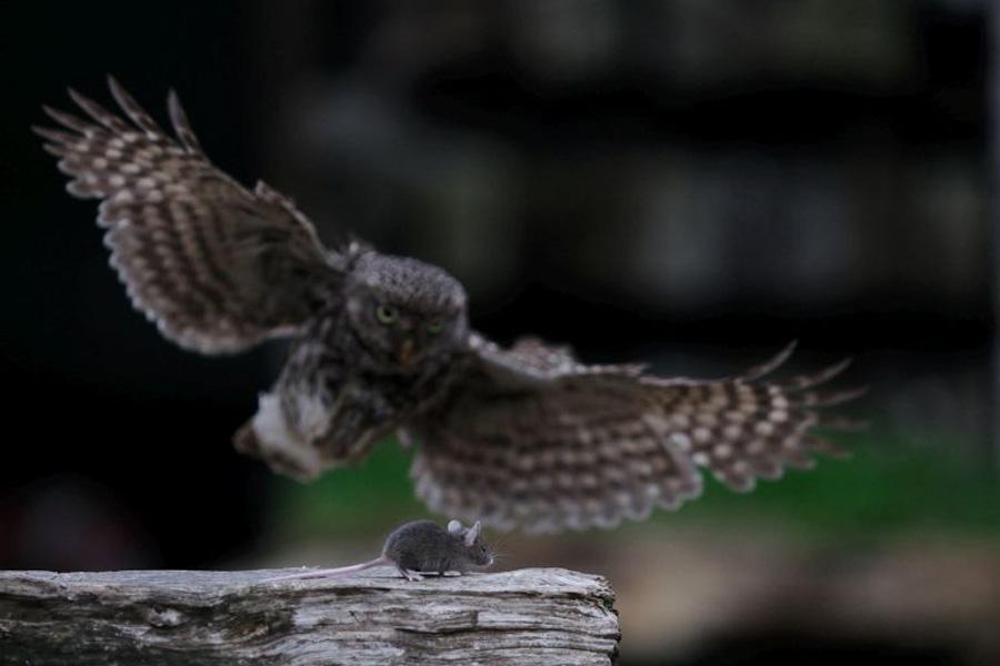 Nächtliche Tierwelt im Museumsdorf: Familienführung mit der Natur-Landschaftsführerin Nicola Mahnke