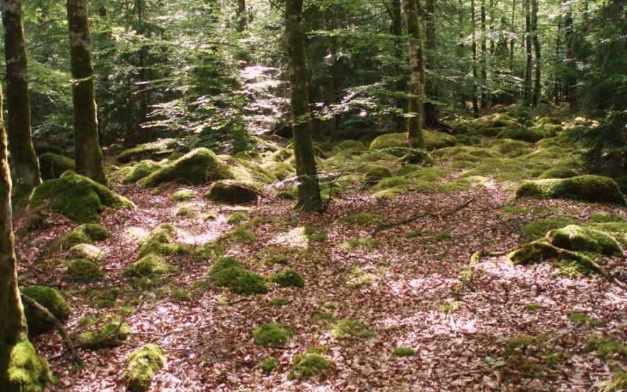 """""""Ohne Angst in den Wald!"""" – WeibsWerkerinnen laden ein"""