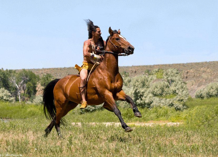 Reise durch die Welt der Pferde