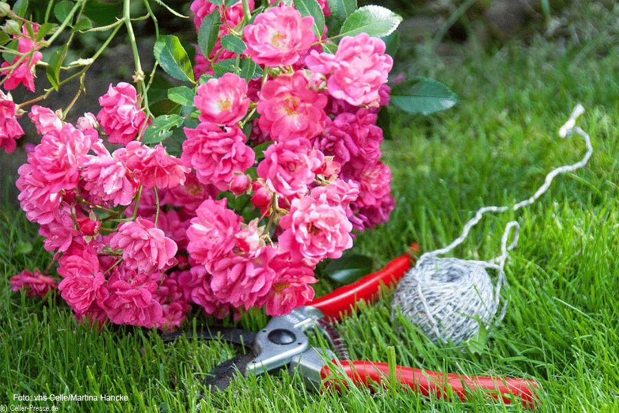 Von Gartengestaltung bis Cloud einrichten