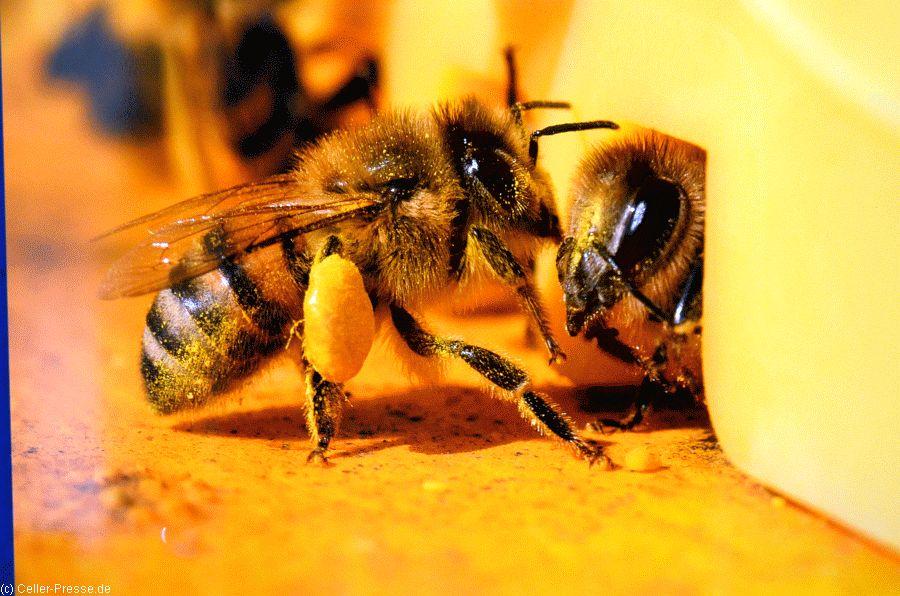 Praxisgerechte Nisthilfen aus Hartholz für Wildbienen und Co. – NABU gibt Tipps, wie Sie die häufigsten Fehler vermeiden