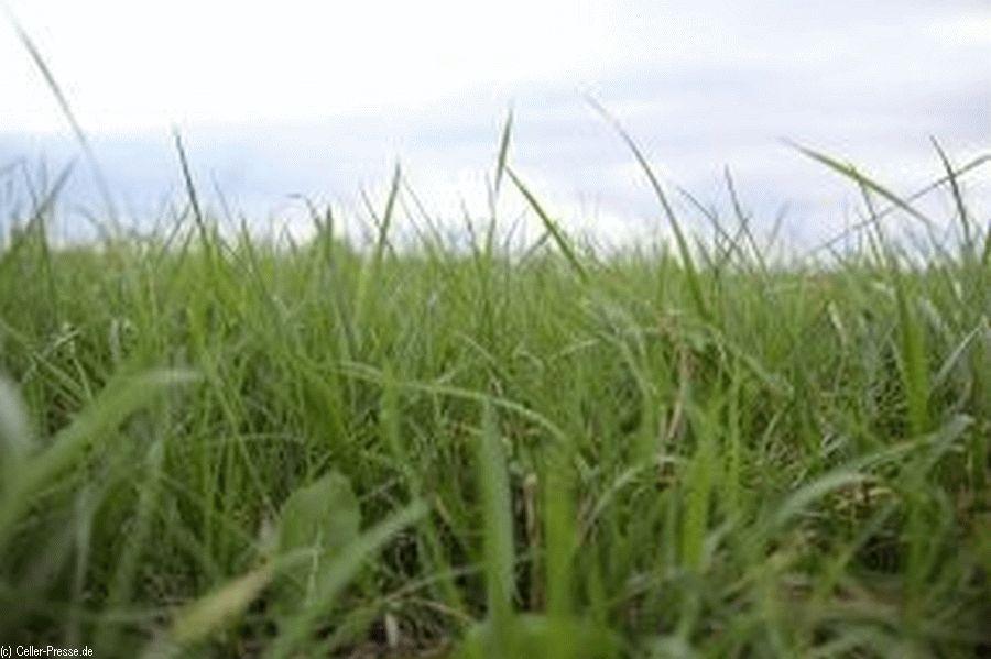 Spät im Jahr sind Wiesen und Weiden ergrünt