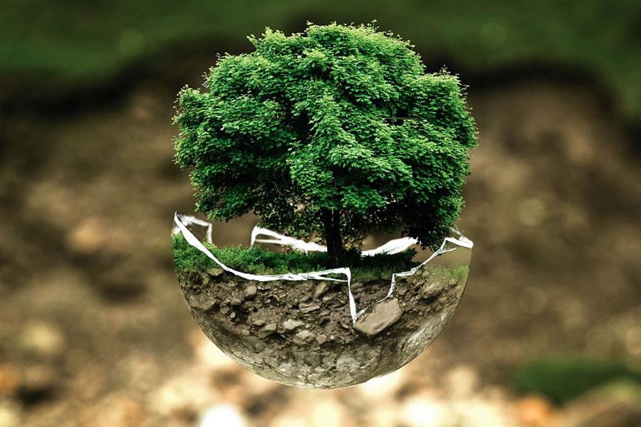 Neu bei der vhs Celle: Webinare zu Öko-Themen