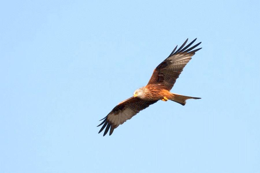 Der frühe Vogel fängt den Wurm – Exkursion für Frühaufsteher am Sonntag den 5. Mai