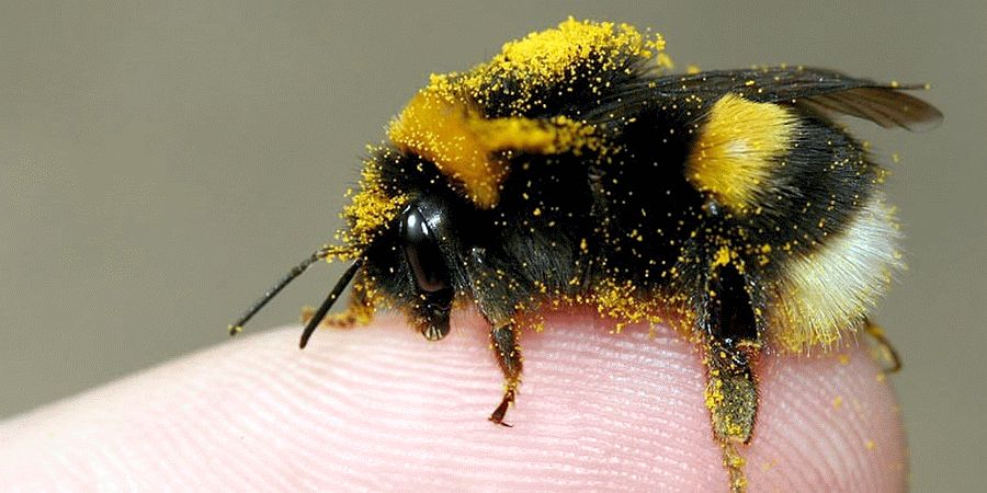 NABU: Balkon zur Naturoase für Insekten machen – Bienenparadies statt Betonwüste