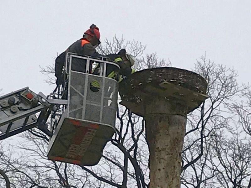 Neues Zuhause für Meister Adebar – Feuerwehr Celle unterstützt bei Errichtung eines Storchennestes