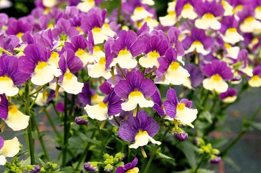 Sommerblumen, die Menschen und Insekten erfreuen