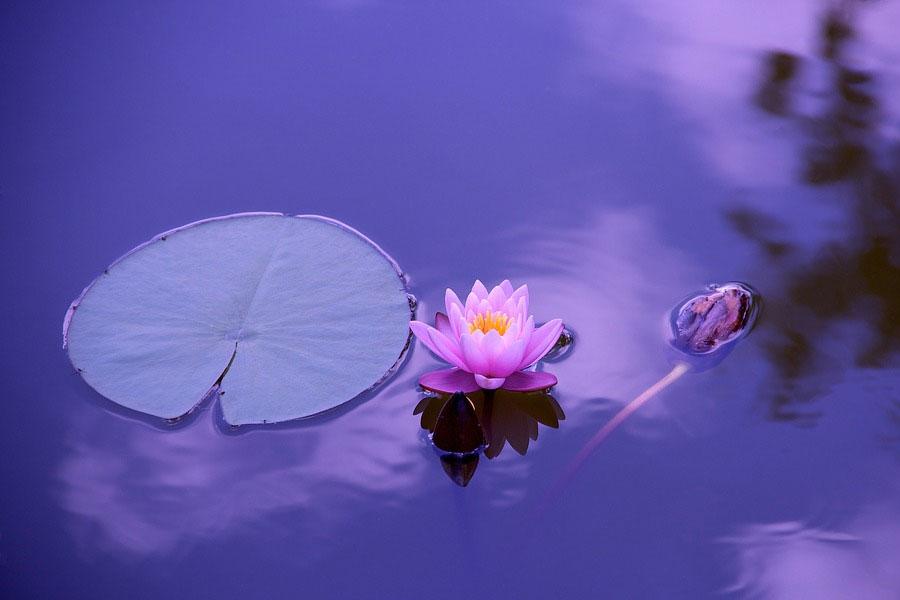 Meditation vor Tau und Tag in Klein Hehlen