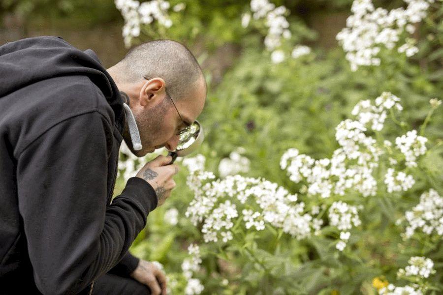Zählen, was zählt – NABU startet Aktion Insektensommer – Insekten melden vom 31. Mai bis 9. Juni und vom 2. bis 11. August