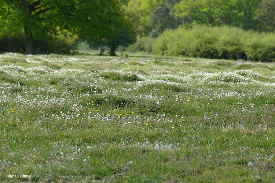 Sicherung von Natura 2000-Gebieten im Landkreis Celle