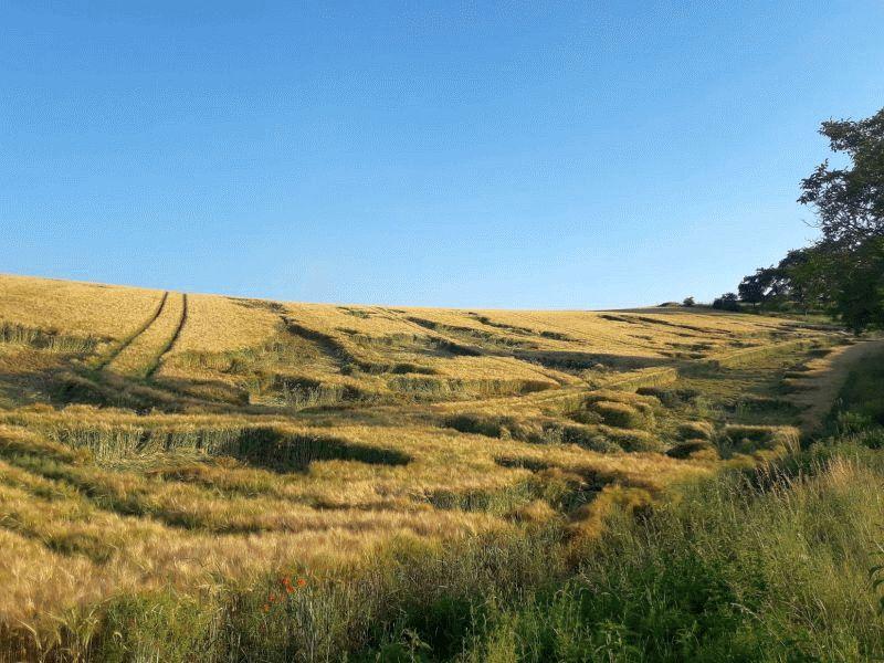 Unwetter halten Niedersachsens Bauern in Atem