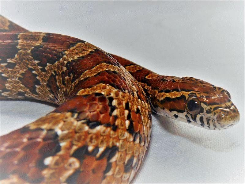 Ferienspaß: Typisch Schlange