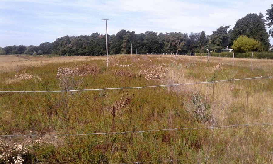 Illegaler Kahlschlag am Tribünenbusch: Rund 4.000 m² Eichenpflanzung zerstört – Zeugen gesucht