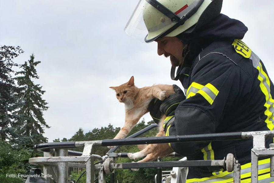 Katze von Baum gerettet