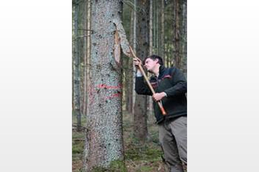 Neuer Revierleiter im Forstamt Oerrel Stefan Heidecke leitet seit dem 01. Juli die Revierförsterei Karrenbusch