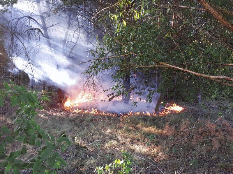 Ortsfeuerwehr Wienhausen erneut zu einem gemeldeten Waldbrand alarmiert