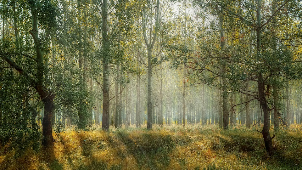 Schlachtabfälle nach Diebstahl einer Heidschnucke im Wald aufgefunden