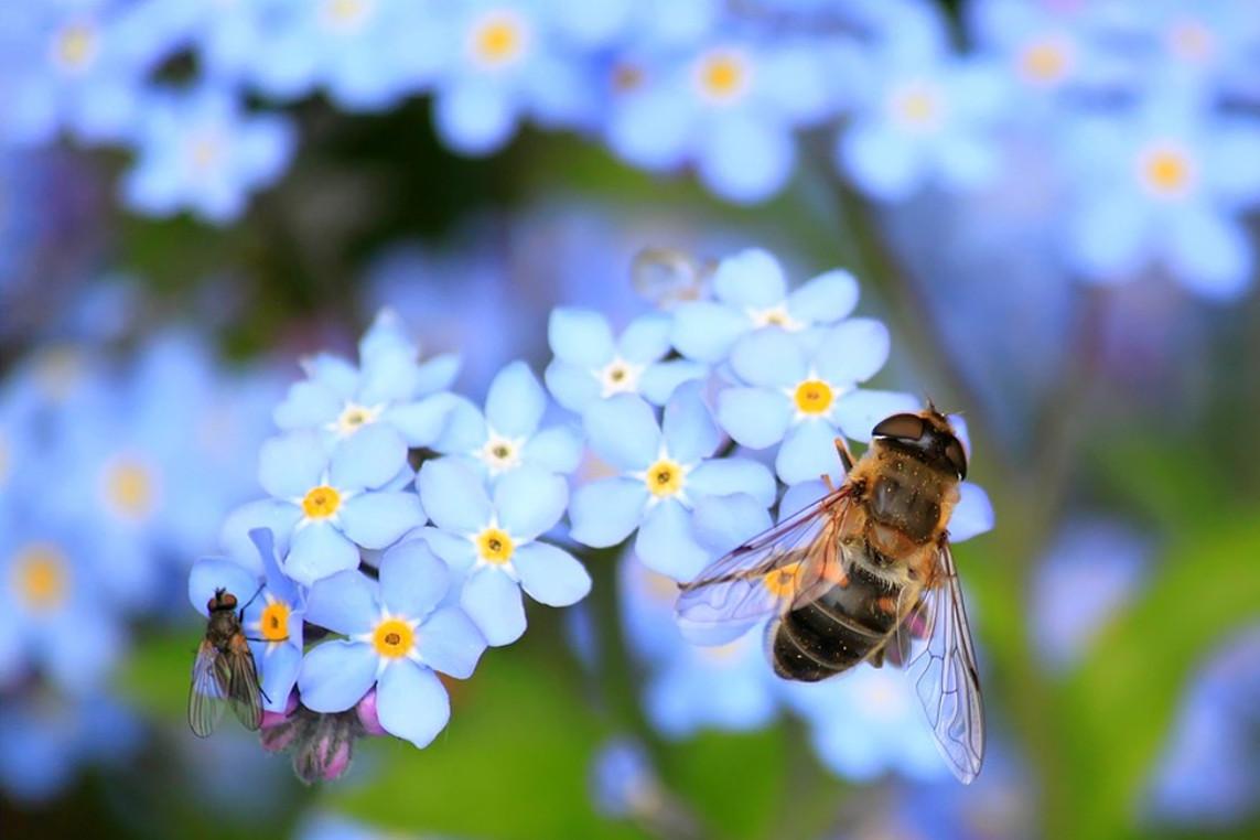 Bienenkorbflechten im Museumsdorf Hösseringen