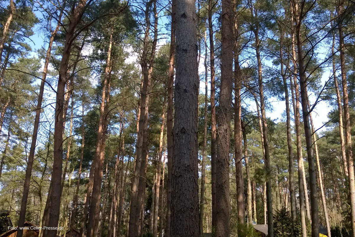 Bodenschutzkalkung im Forstrevier Schafstall
