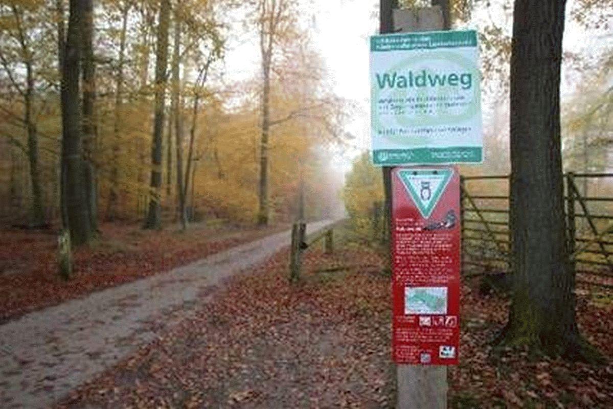 Laubholzernte in der Försterei Bobenwald – Niedersächsisches Forstamt Oerrel beginnt mit der Ernte starker Buchen und Eichen