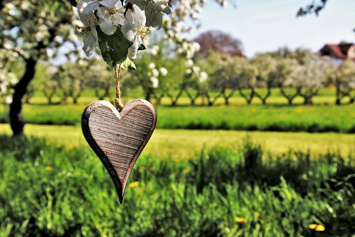 Obstbaum-Verschenk-Aktion – Termine für die Ausgabe stehen fest