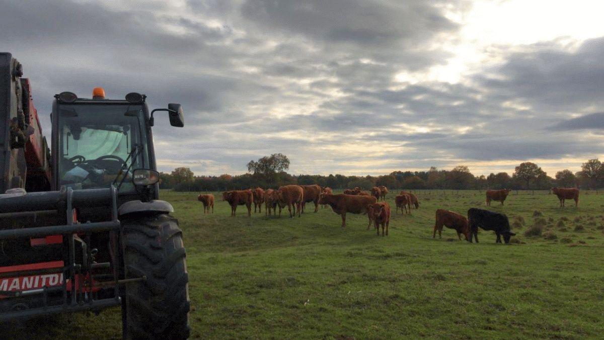 Verendete Kuh sorgt für Feuerwehreinsatz