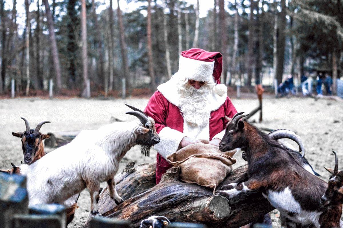 Tierische Weihnacht mit Weihnachtsbaumverkauf im Wildpark Müden
