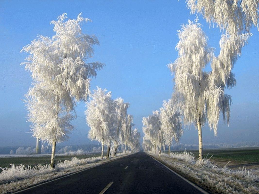 Winterliche Birken sind Allee des Monats im Januar/Februar 2020