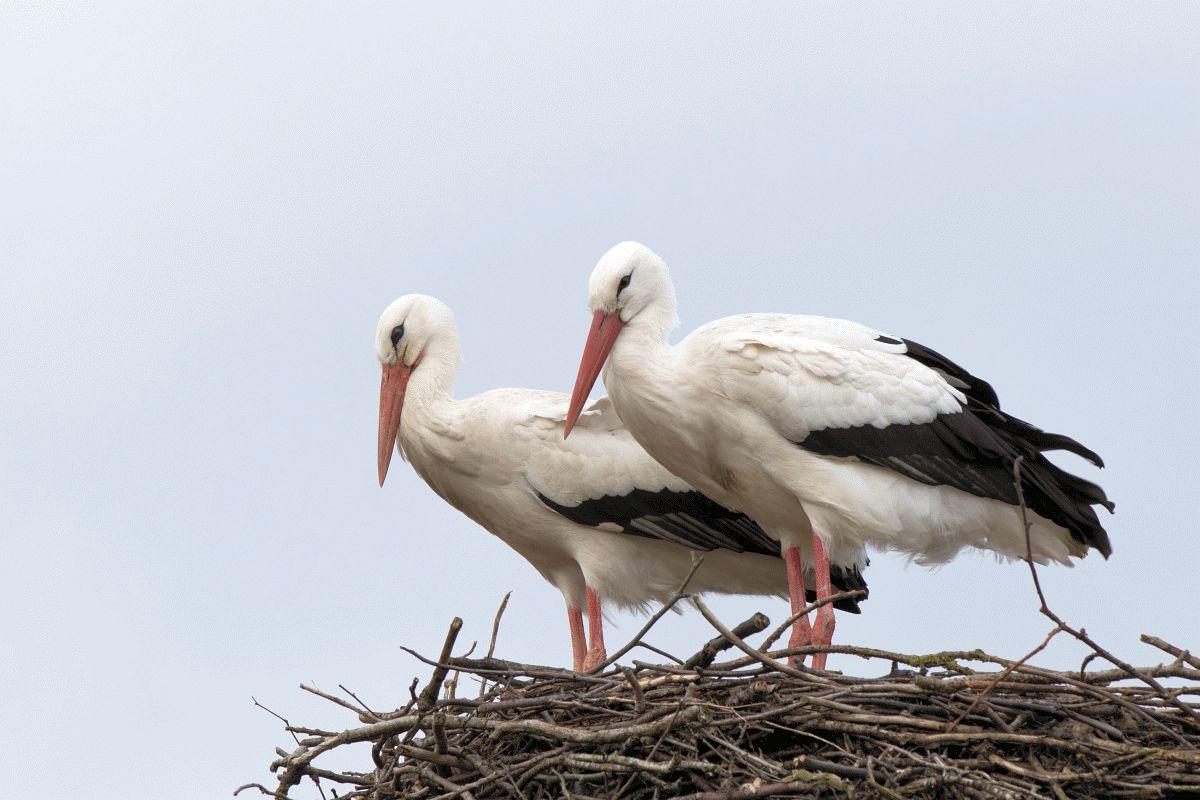 NABU-Artenschutzzentrum geschlossen: Tierische Notfälle werden nach wie vor aufgenommen – Storchenfest fällt aus