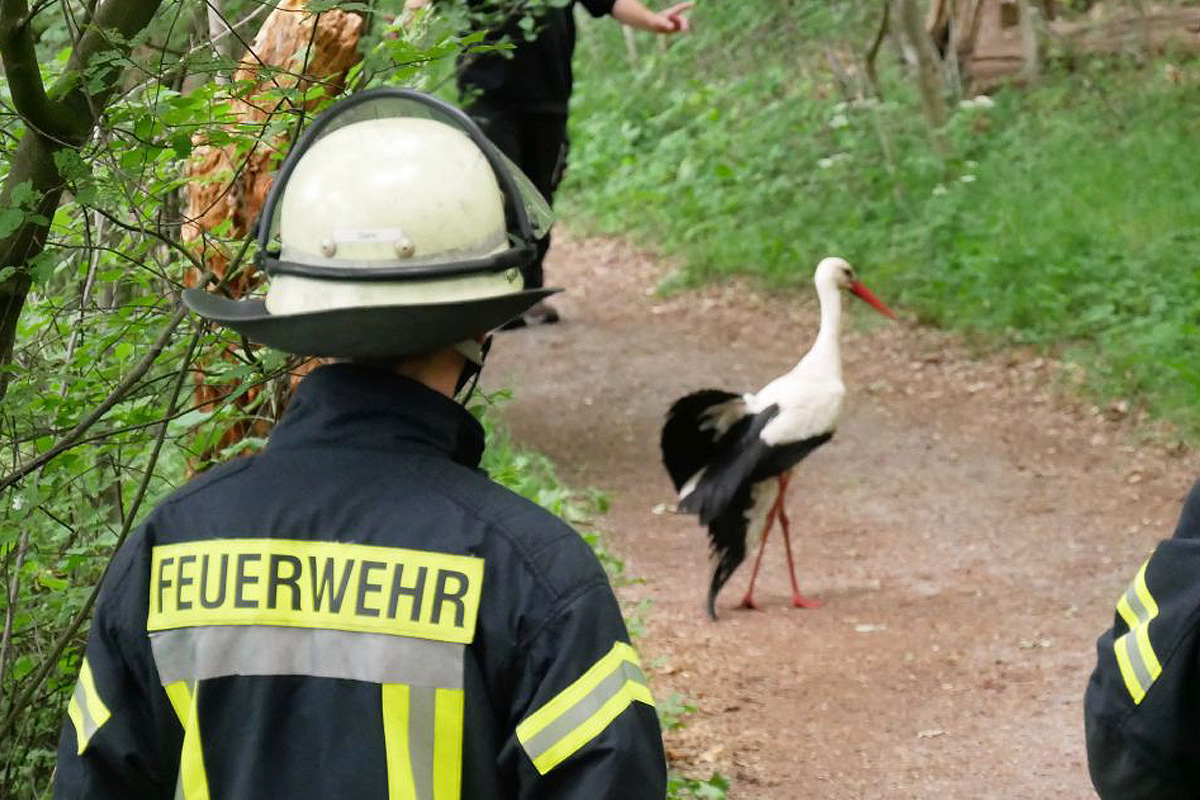 Celler Feuerwehr rettet verletzten Storch