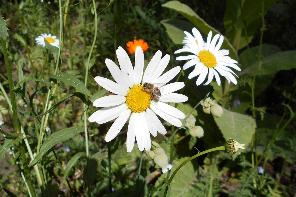 Celler Waldfriedhof – Blumenmeere und Themengärten stehen in voller Blüte
