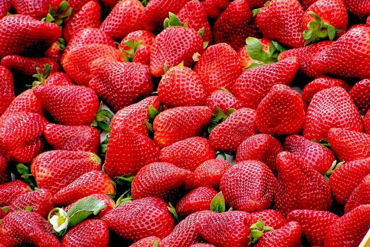Heimische Erdbeer-Ernte nimmt Fahrt auf