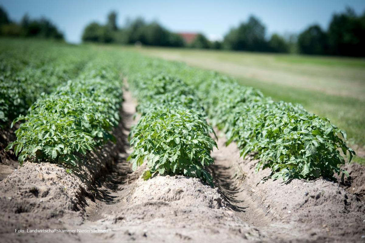 Ökomodellregion Heideregion Uelzen: Lernlabor für mehr regionale Bio-Produkte