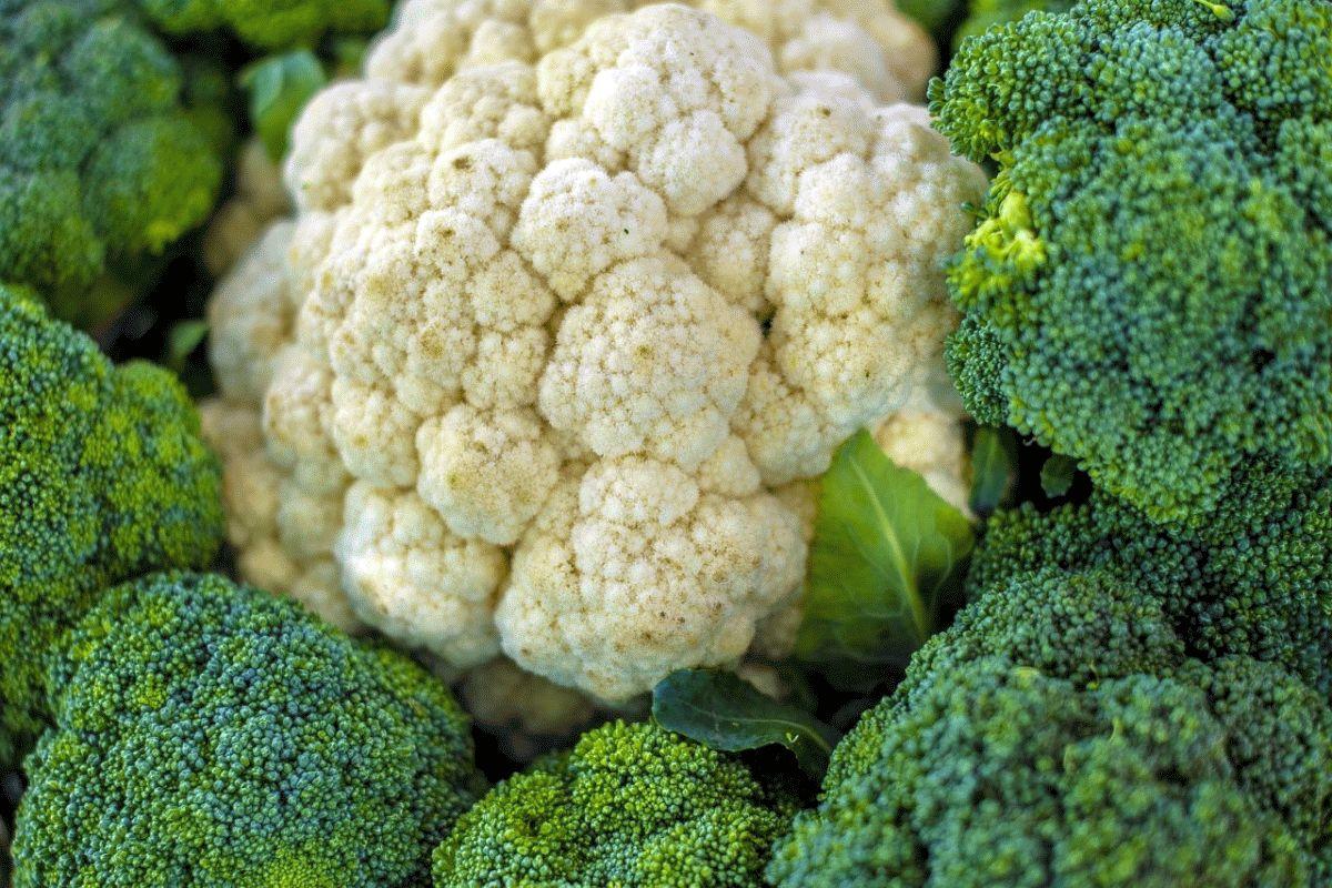 Weniger Gemüse verschwenden – vom Acker bis zum Teller: Projekt zur Rettung von Lebensmitteln