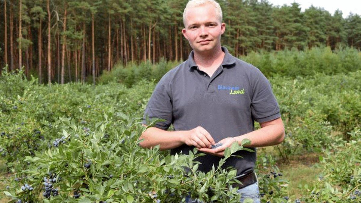 Blaubeeren geben den gesunden Extrakick – Niedersachsen ist Anbauland Nummer 1 – Plantagen öffnen für die Selbstpflücke