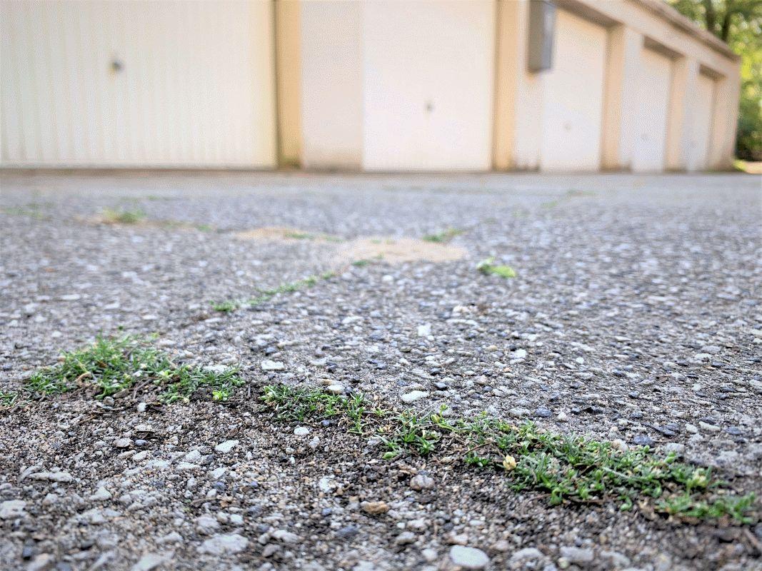 Landwirtschaftskammer: Unkrautvernichter nur auf gärtnerisch genutzten Flächen im Hausgarten erlaubt – Bei Verstößen drohen Bußgelder