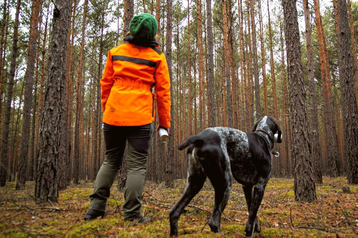 13 Millionen Kubikmeter Schadholz in Niedersachsens Wäldern – Mehr Forstpersonal im Kreis Celle gefordert