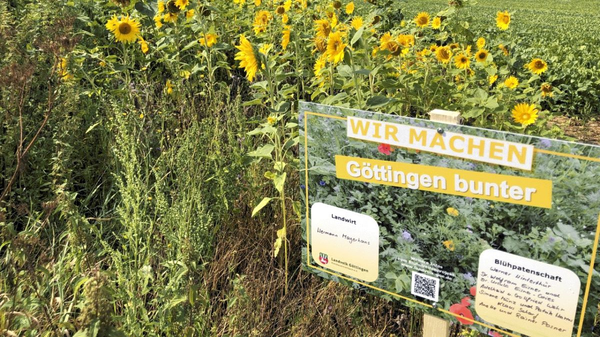 Landwirte legen fleißig Blühstreifen an – Niedersächsischer Weg: Über Agrarumweltmaßnahmen Biotopverbund voranbringen