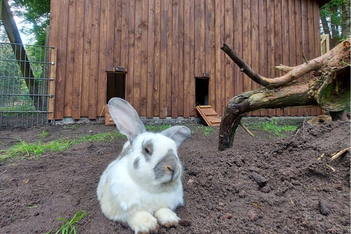 Neues Zuhause für die Kaninchen vom Wildpark Müden