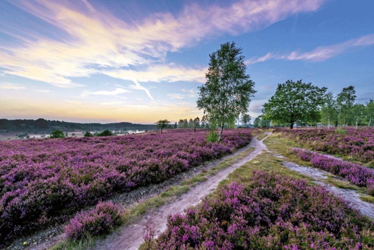 Spontanurlaub in der Lüneburger Heide – Freie Unterkünfte für Kurzentschlossene