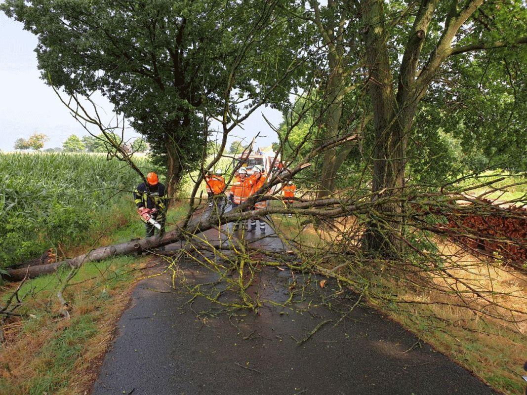 Baum stürzte um