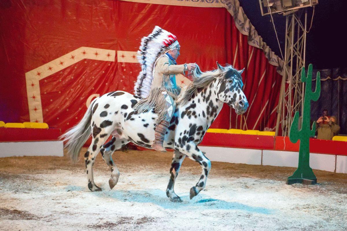 """Indianer-Pferde-Show im Museumsdorf """"Freilicht-Arena anno 1900"""" zu Gast im Museumsdorf Hösseringen"""